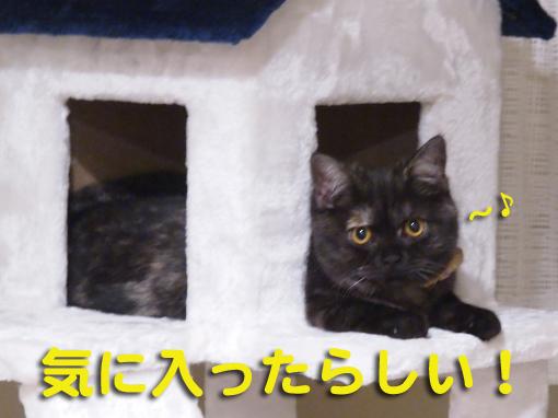 shinkiyo2.jpg