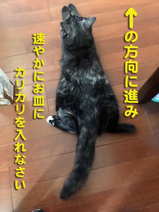 yajirushi2.jpg